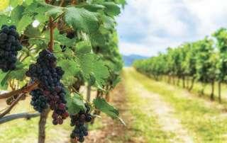 Wine handling