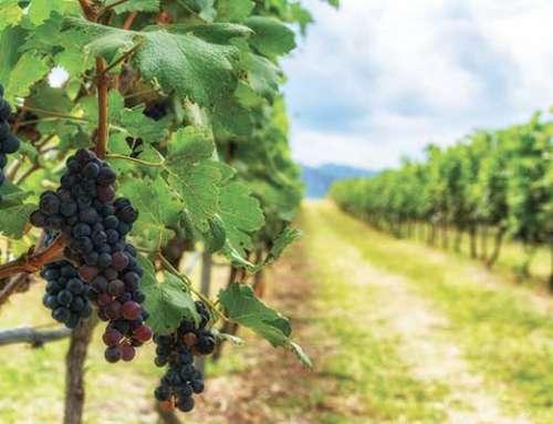 Movimentazione del vino